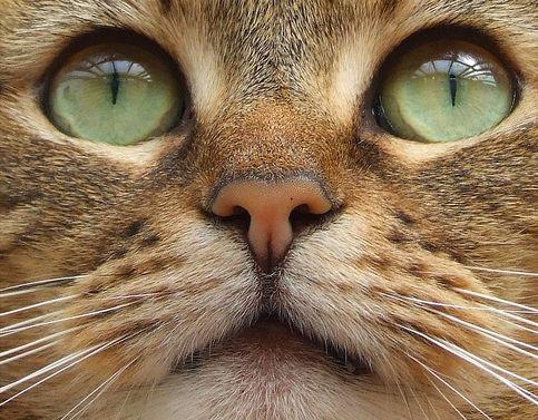 Evilági jószág a macska?