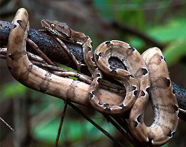 Kígyófiú vagy kígyólány?