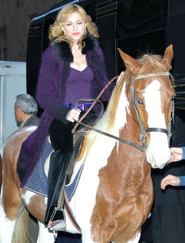 Madonna koncert: állatorvosokkal készülnek a Kincsem Parkban