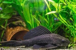Alszanak-e a halak?