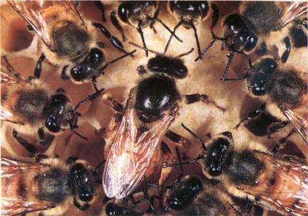 A méhek élete (videóval!)