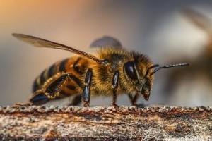 A méhek mozgalmas élete