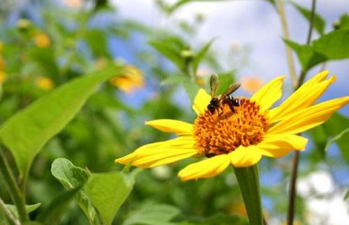 méhbarát kert