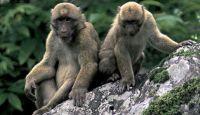 Több száz új fajt fedeztek fel a Himalája keleti részén