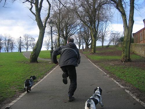 Miért fut el a kutya?