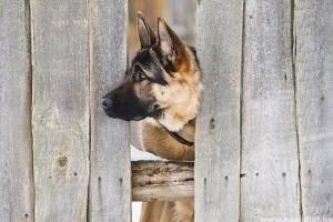 Miért szökik el a kutya? Mit tehetünk szökés ellen?