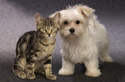 Hogyan féregtelenítsük macskánkat páncéling nélkül?