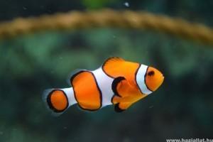 Ami sok, az sokk - avagy a halak túletetése