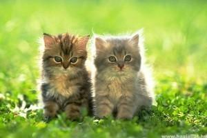 Egy macska, vagy két macska?