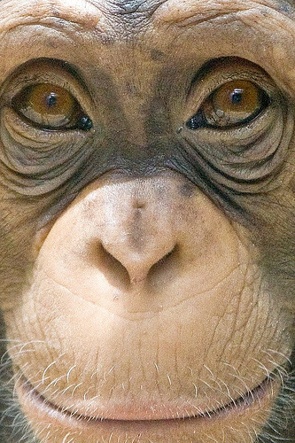 """Majomszeretet- avagy """"Jóban rosszban"""" a Gansengorfi Safari Park lakói között"""