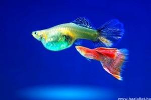 Új hal, új veszély? Karanténba vele!