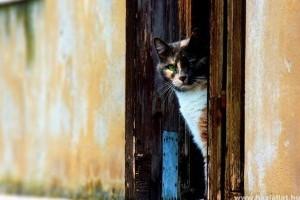 Macskaajtó: hogyan szoktassuk hozzá cicánkat?