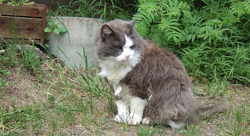 Az idős cica gondozása - Gyakori kérdések