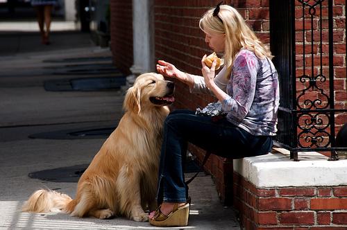 koldulo-kutya