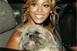 Hogy hívják a sztárok kutyáit?