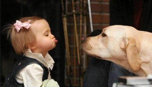 Kislány és labrador kutya