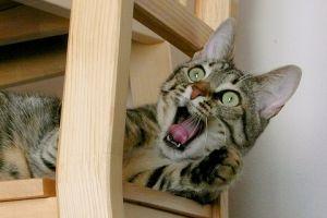 A macskák testbeszéde (1.rész): Arcvonások