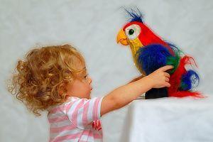 A gyerek madarat akar...