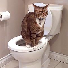Macska és WC