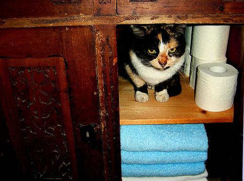 Tricolor cica a szekrényben, WC papír mellett