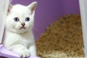 15 tudnivaló a macskavécéről macska-gazdiknak