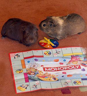 Monopoly és tengerimalac