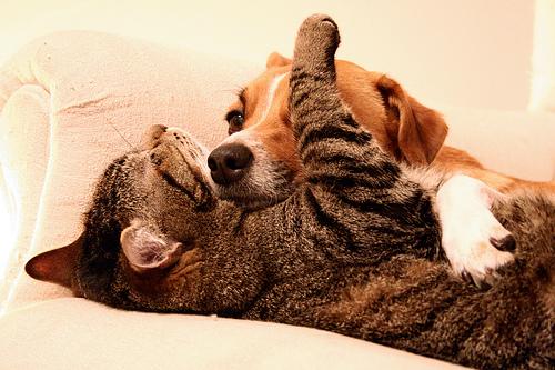 kutya-macska-baratsag