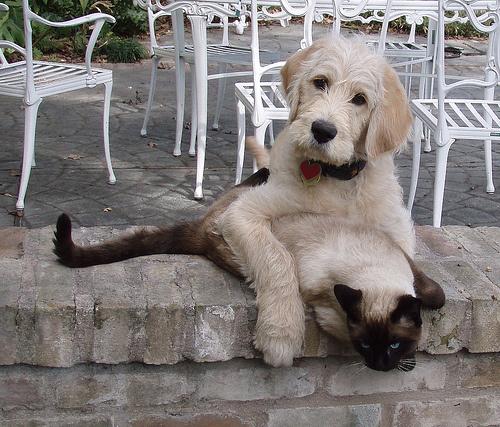 Kutya-Macska barátság, avagy hogy jön ki a macska más ...