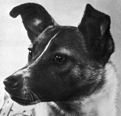 lajka-kutya