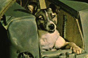 Kutya az űrben - Lajka igaz története