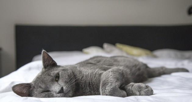 Khmm! Szőrcsomó! - avagy mit tegyünk a macskaallergia ellen?