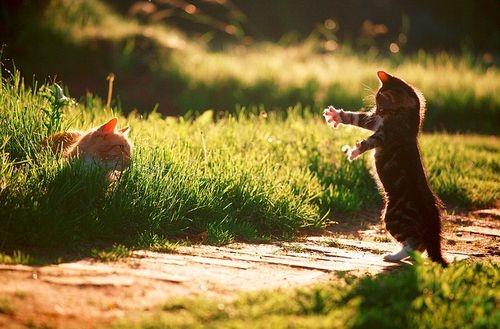 macska játszik, macskák játszanak a kertben