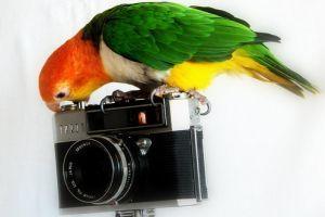 9 egyszerű trükk házikedvencek fotózásához
