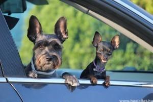 Négylábúval négy keréken - avagy kutya az autóban