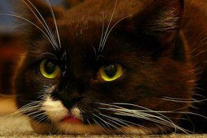 10 év, 9 élet, 1 fog avagy az öregedő macska mindennapjai