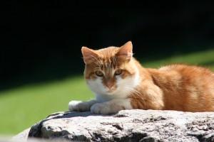 Cila cica varratszedése
