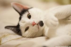 Amélie fülproblémája - hogyan gyógyítsuk a fülbeteg macskát?