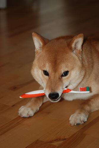 Kutya fogmosás