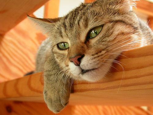 Macska a lépcsőn