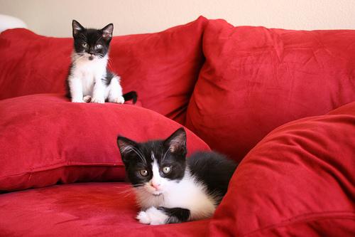 Két fekete-fehér cica piros kanapén pihen