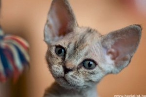 Hogyan legyünk felelős macskatartók?
