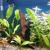 Az önműködő akvárium