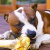 Kutyának csontot, macskának tejet?!