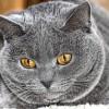 Fusson, akit kergetnek! - Kövér macska az edzőteremben