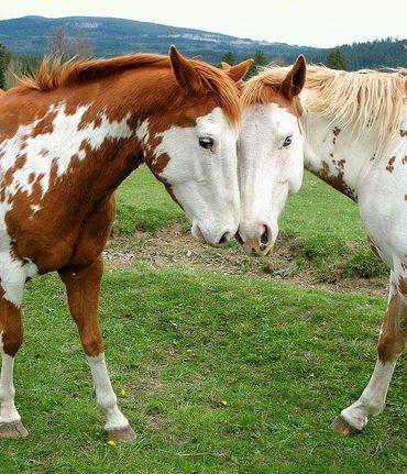 szerelmes-lovak