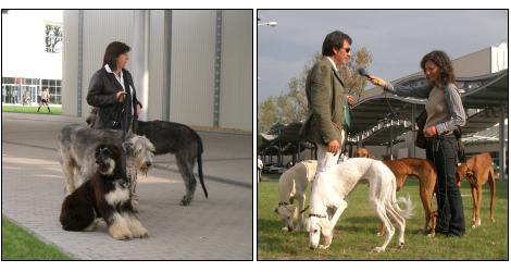 Európa kutyakiállítás