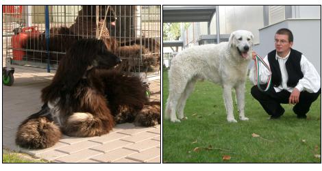 kutya, kutyakiállítás, európa kutyakiállítás