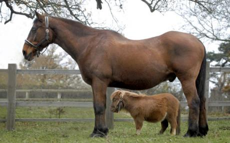 Kis ló, nagy ló