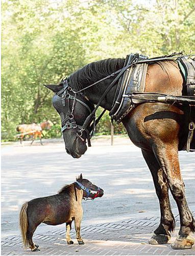 pici ló, nagy ló