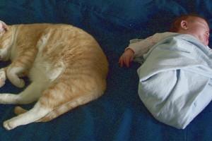 Asztmás gyerek mellé cica?